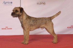 Crufts winner 2012